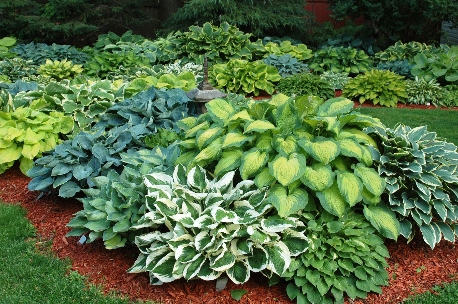 1000 images about hosta gardening on pinterest for Plant landscape design